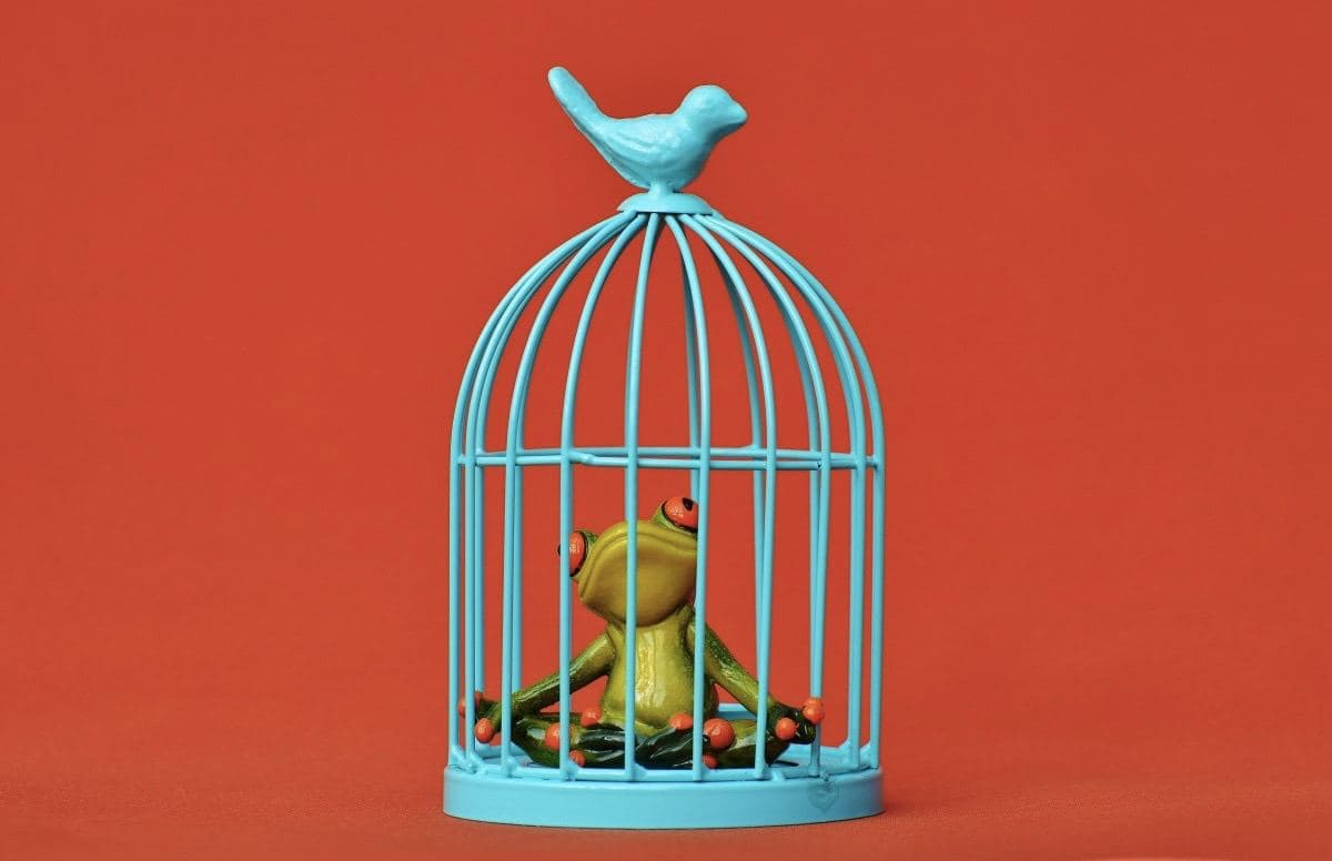 В худшей британской тюрьме открылся контактный зоопарк для заключенных