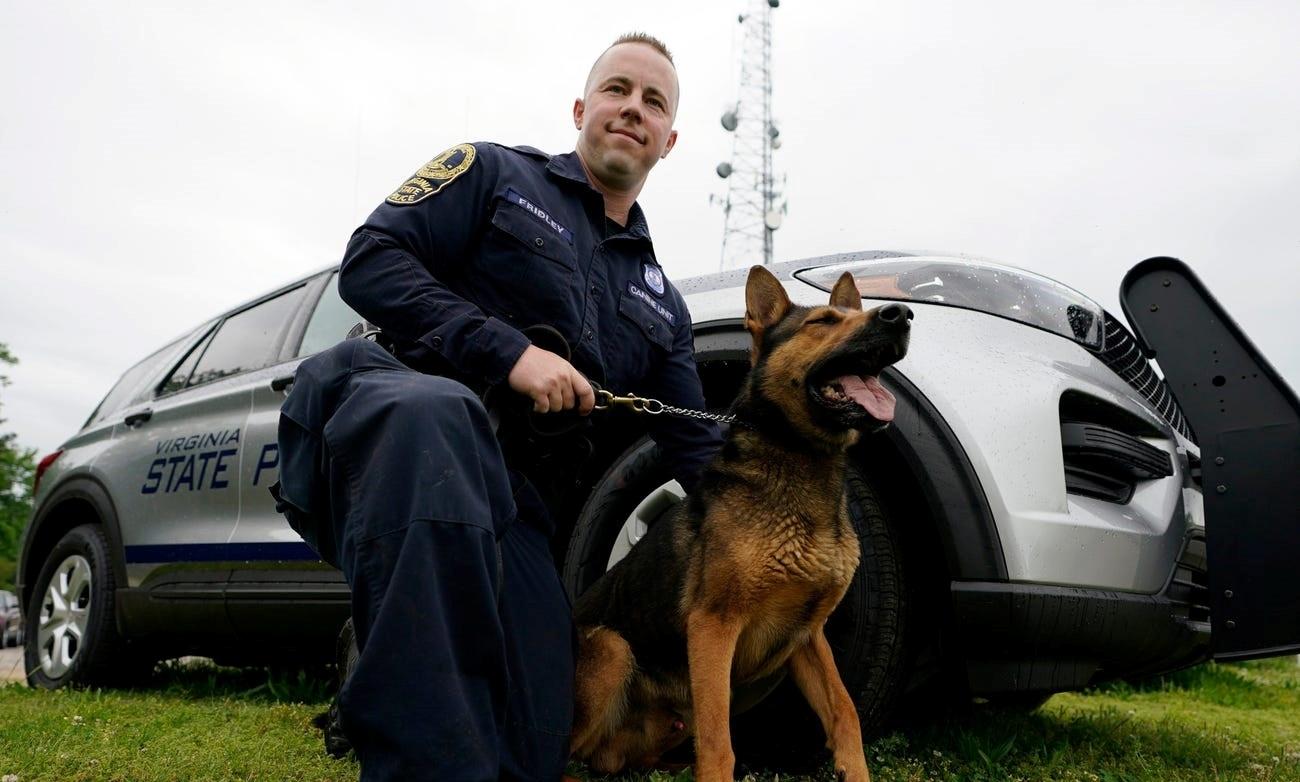 В США служебные собаки досрочно выходят на пенсию из-за легализации марихуаны
