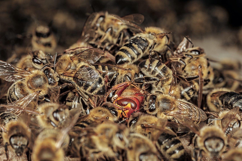 На Закарпатье «Укрпочта» перевозила 8 миллионов пчел. Все они погибли