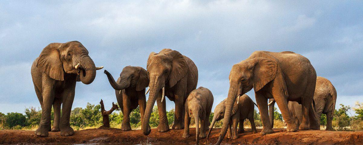 В Индии 18 слонов погибло от удара молнии