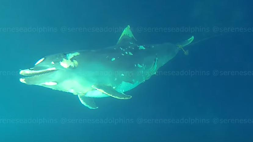 Видео дня: подводное кладбище убитых дельфинов у побережья Крыма