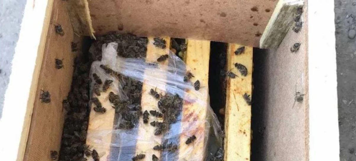 Умершие на Закарпатье пчелы частично «воскресли» (!)