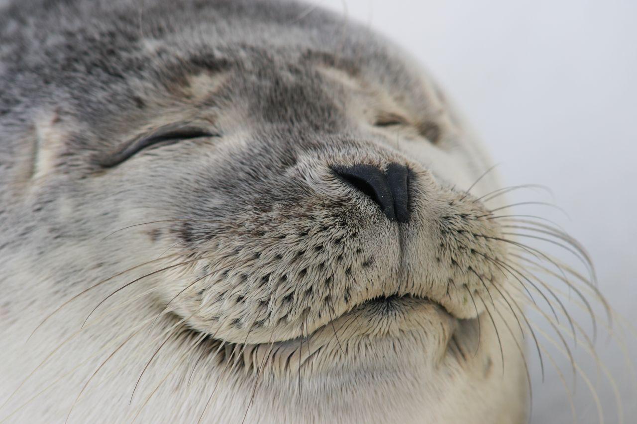 Животные тоже умеют смеяться. Исследование