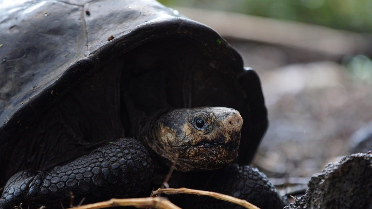 Фото — Parque Nacional Galápagos.