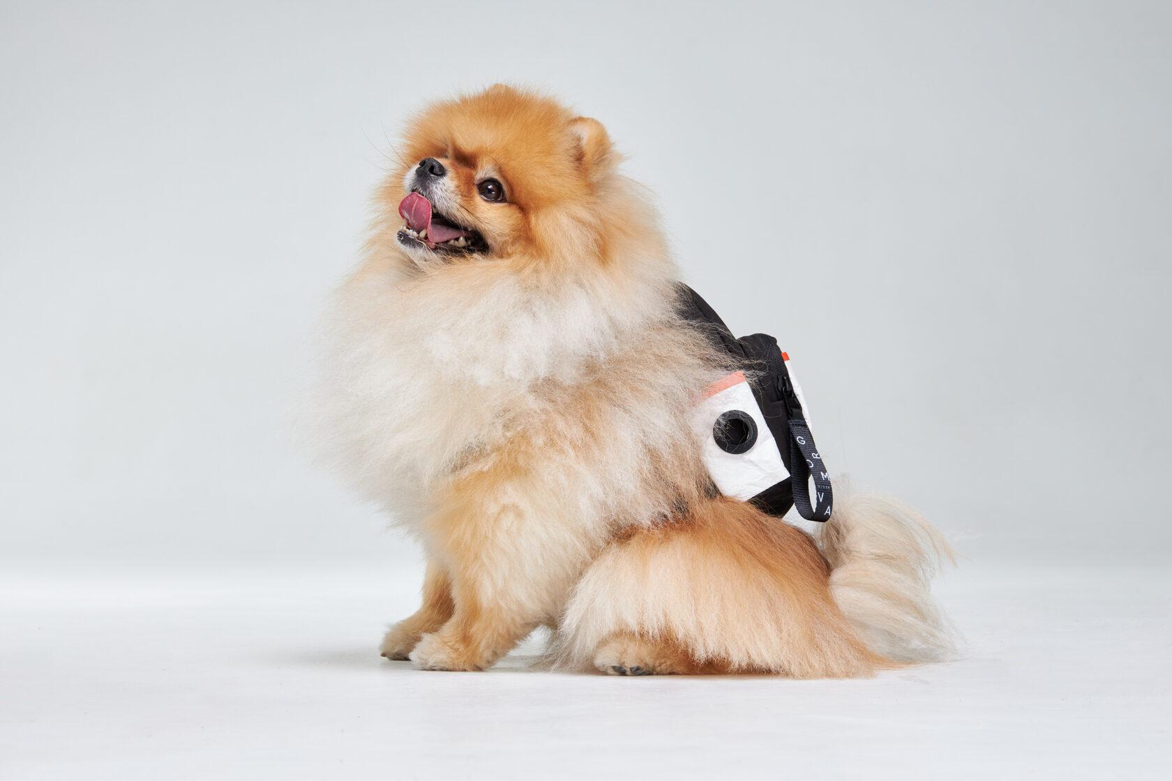 Без косточек и единорожек. Украинская дизайнерка создала бренд рюкзаков для собак (!)