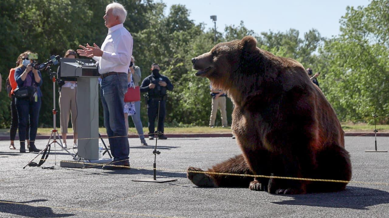 В США кандидат в губернаторы использует в предвыборной кампании медведя