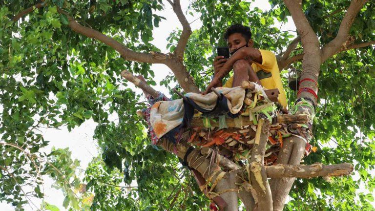 Индийский студент 11 дней самоизолировался на  дереве — боялся заразить коронавирусом семью