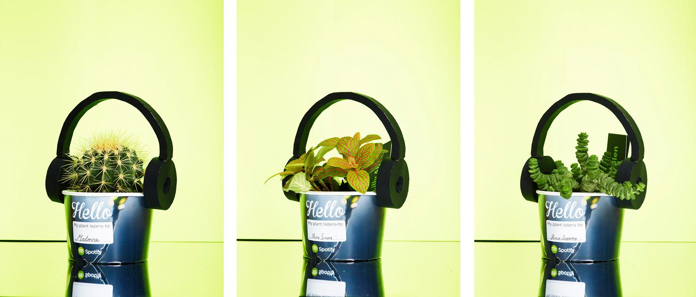 Spotify создал плейлисты для растений (и они популярные!). Объясняем, что это такое