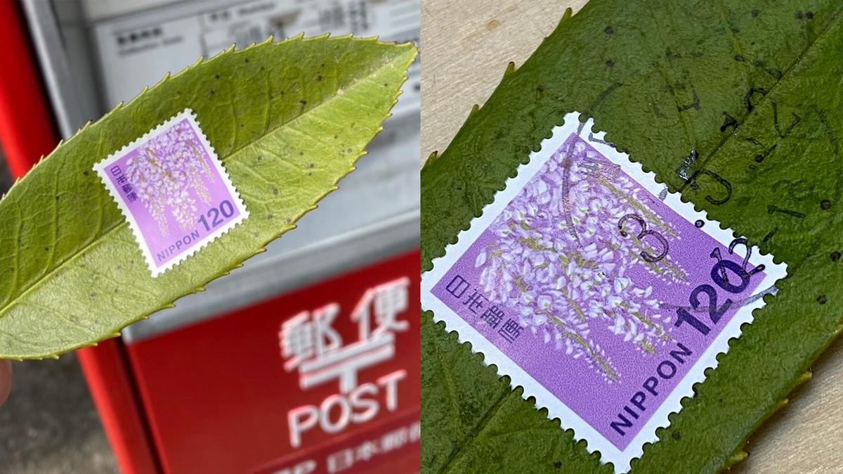 Японские студенты отправляют письма на листьях с деревьев. И получают ответ