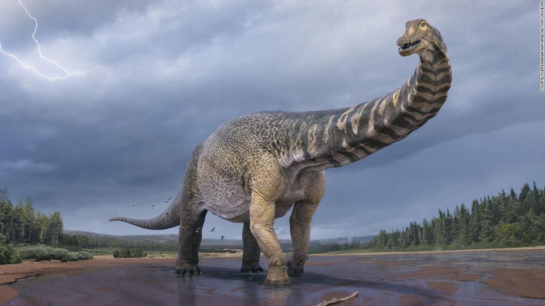 Австралийские ученые открыли одного из крупнейших в мире динозавров. Его длина — 30 метров