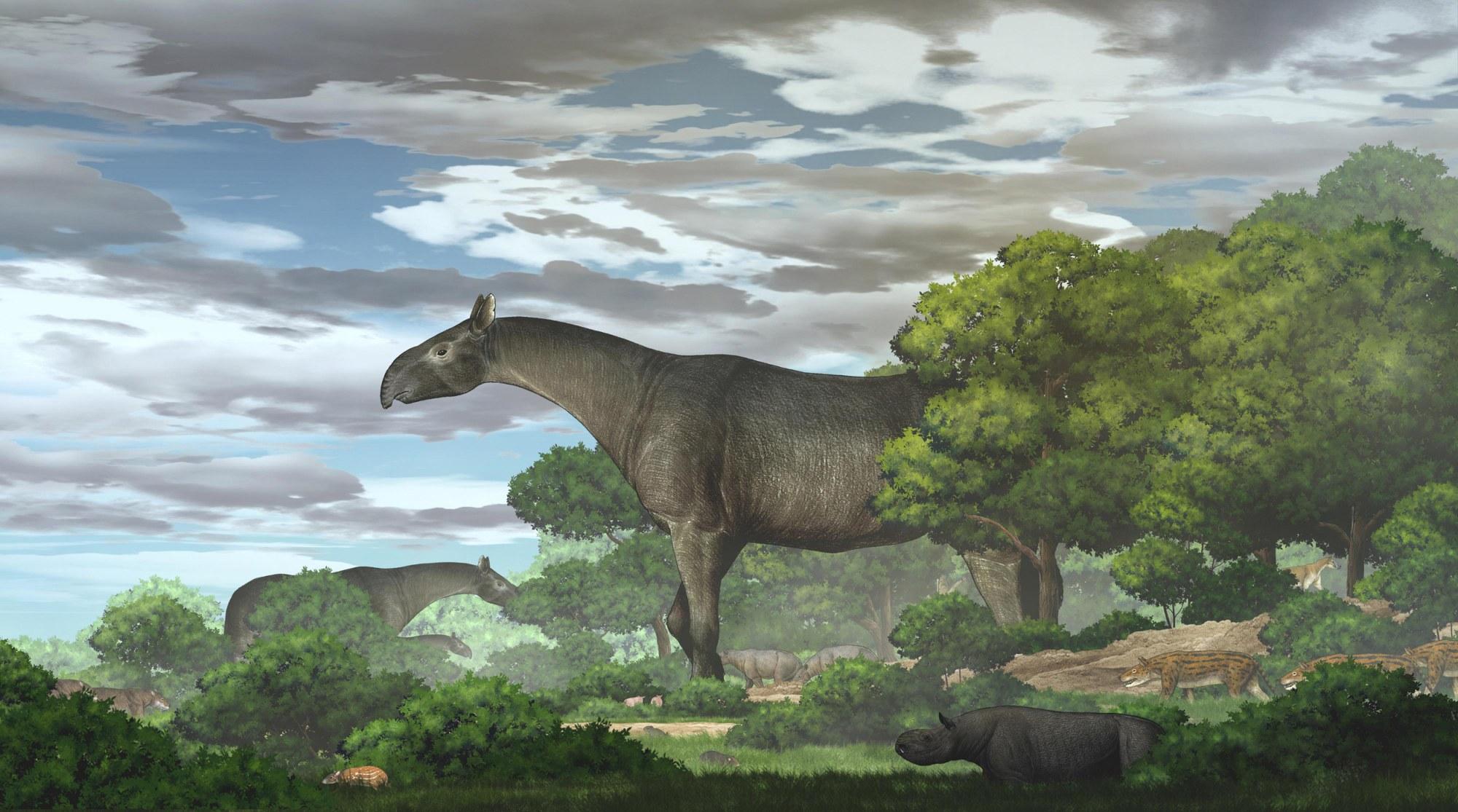 Ученые обнаружили древнего носорога, который был выше жирафа