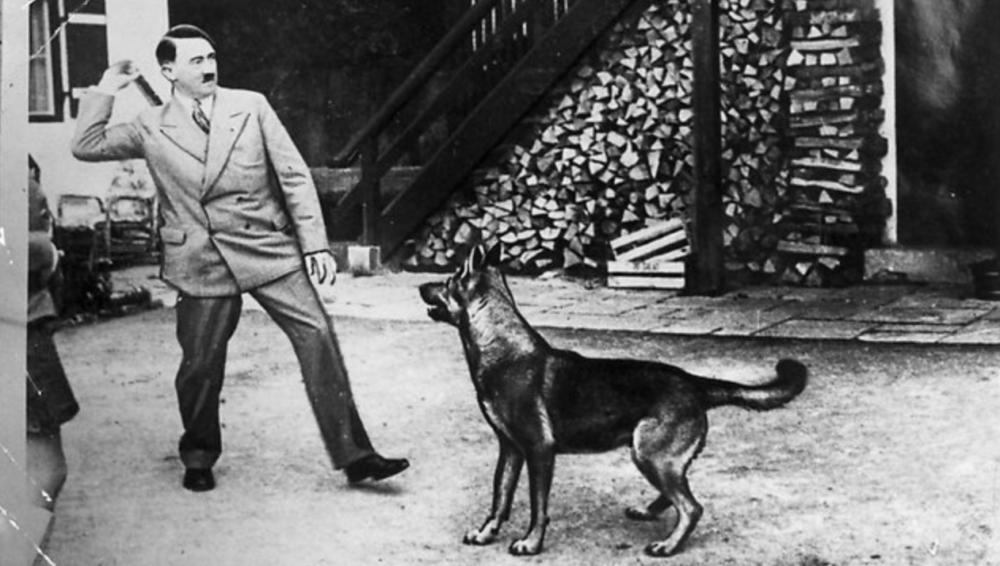 В Австрии осудили отца и сына, научивших собаку зиговать