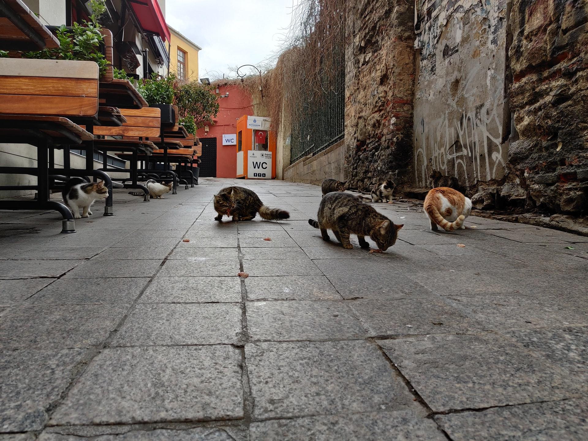 Турция депортирует японца, который ловил и ел стамбульских котов