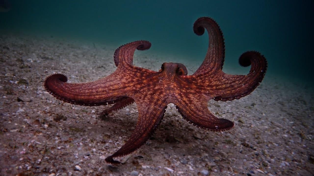 Британия может признать осьминогов и омаров разумными и защитить их законом о благополучии животных