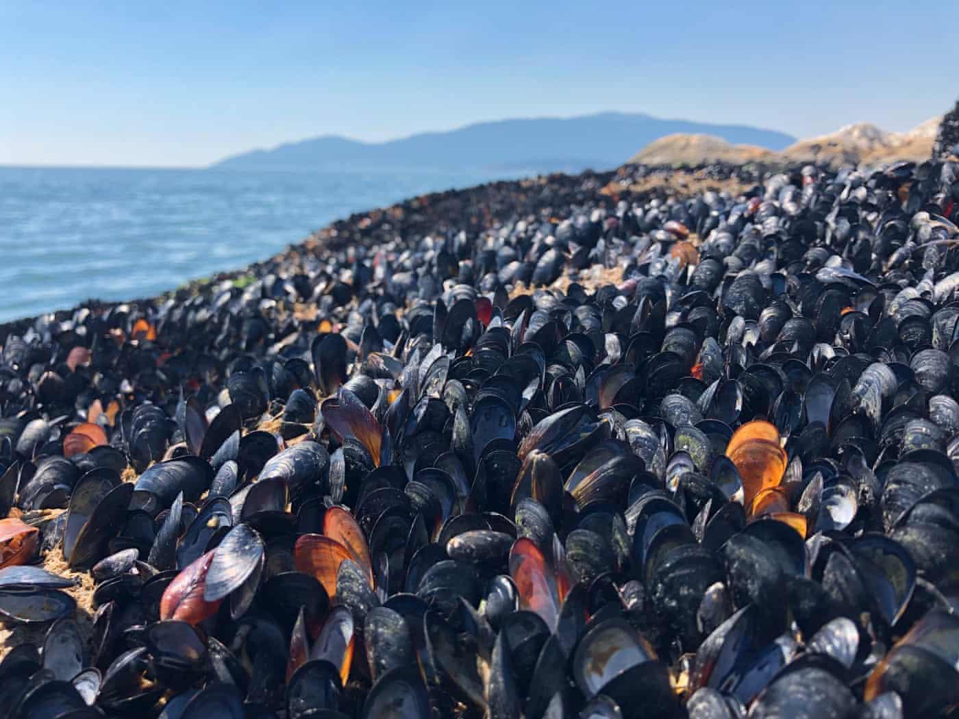 В Канаде из-за необычайной жары погиб миллиард морских животных