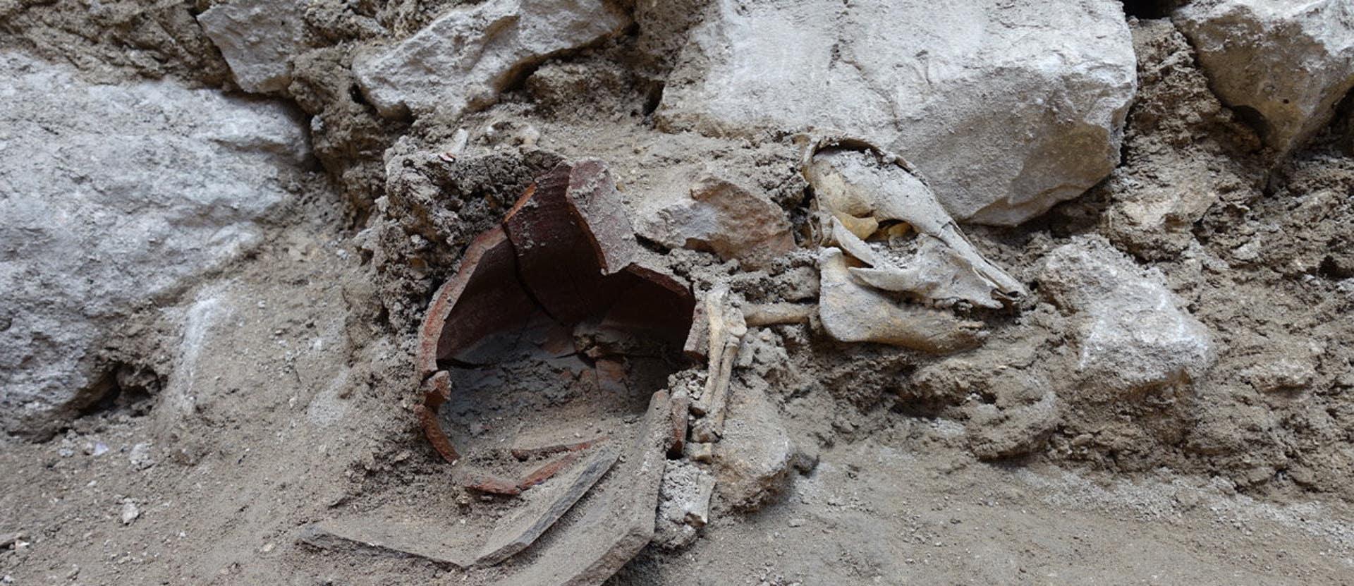 Израильские археологи нашли скелет свиньи в Иерусалиме времен Первого Храма