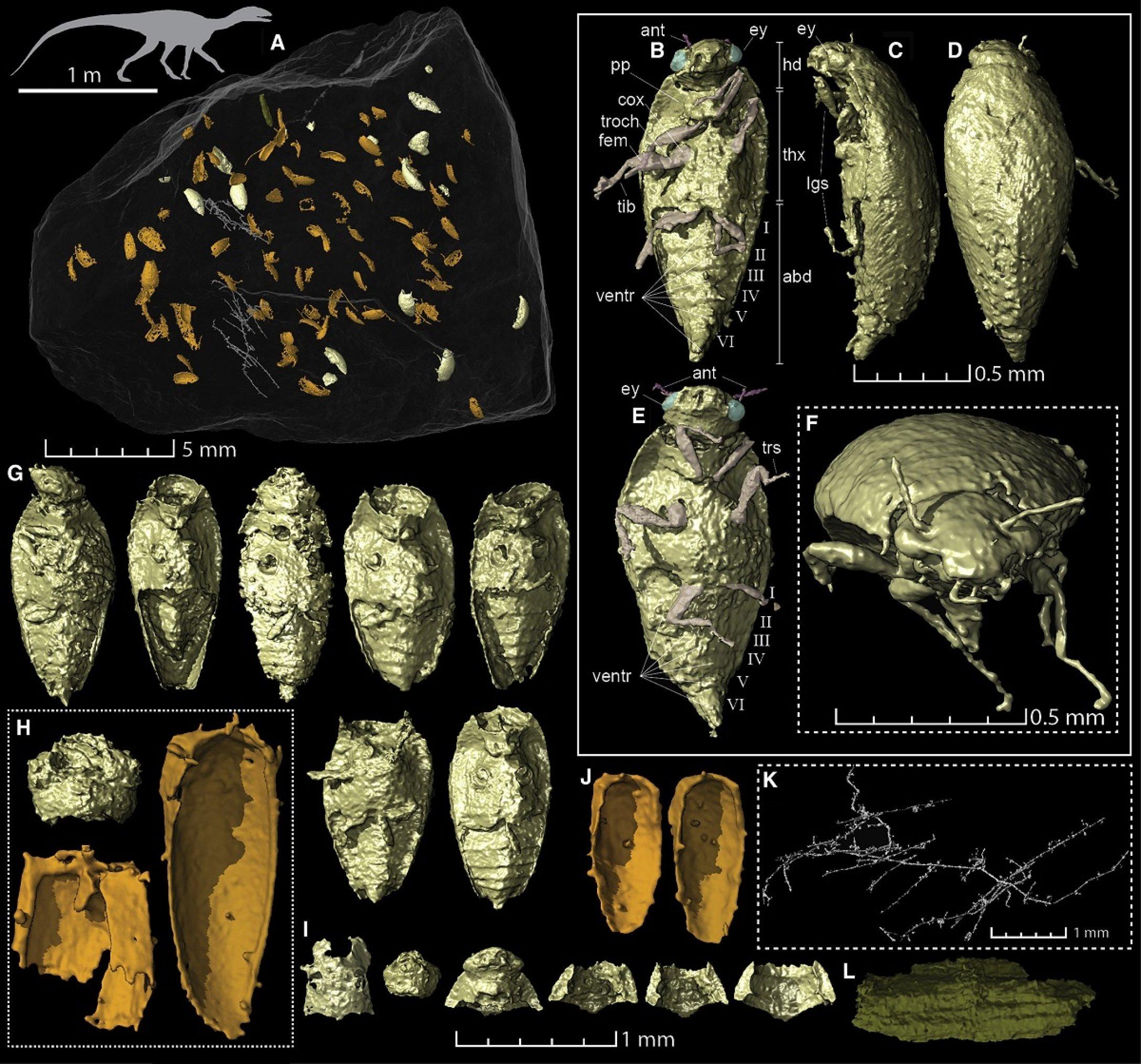 Фото — Current Biology.