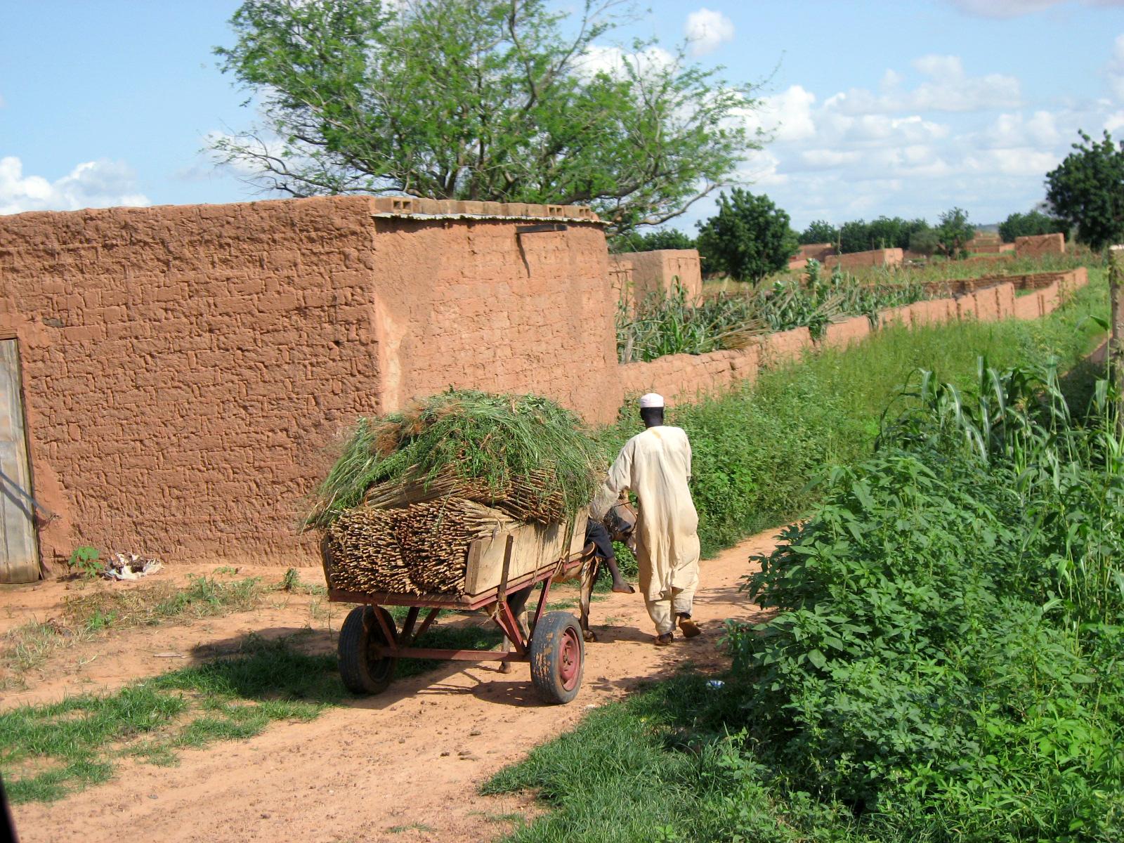 Фермер в Нигере. Фото – Wikipedia.
