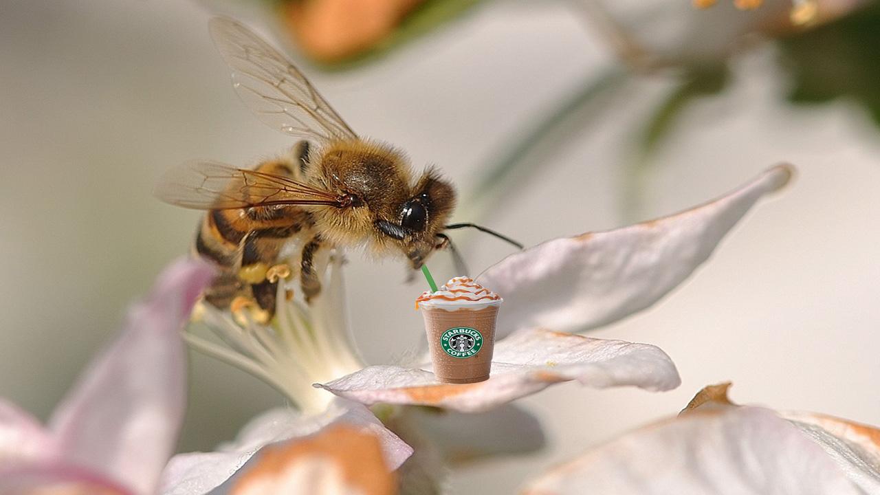Кофеин помогает пчелам опылять более эффективно