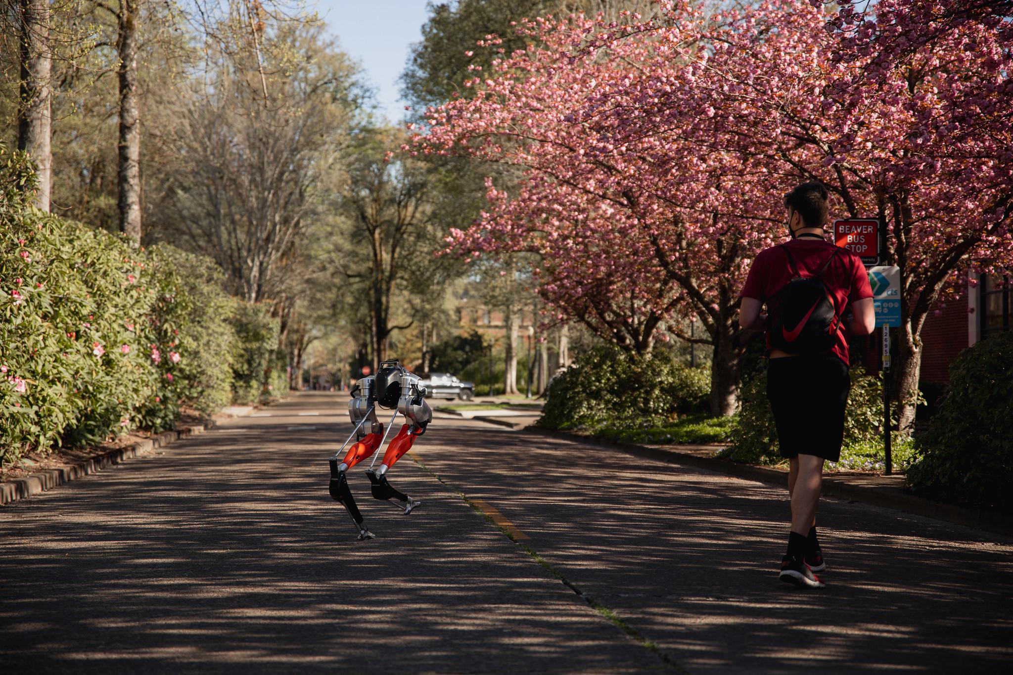 В США двуногий робот впервые пробежал пять километров. Его зовут Кэсси