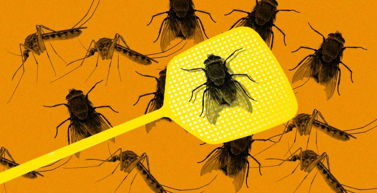 Что будет, если мухи и комары перестанут существовать?
