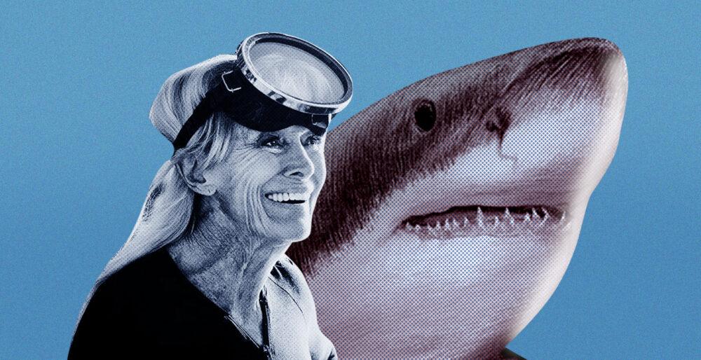 Главный злодей – человек. Как женщина, помогавшая снять «Челюсти», пытается спасти популяцию белых акул