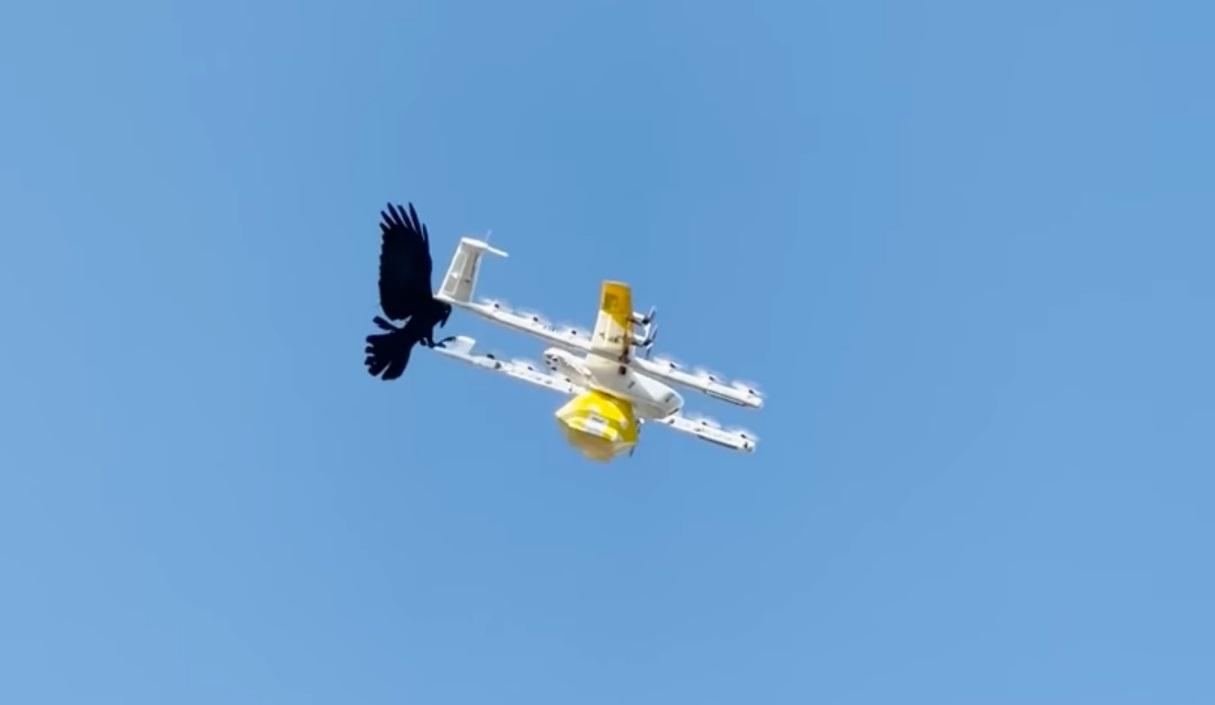 Австралийский Google перестал доставлять товары дронами. Потому что на них нападают птицы