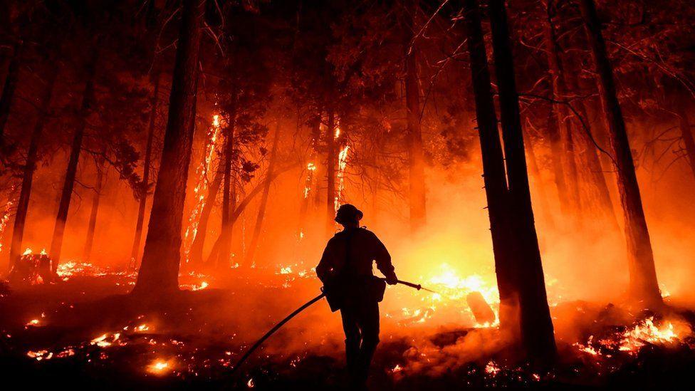 Самому большому по объему дереву в мире угрожает пожар в Калифорнии. Это секвойя по имени Генерал Шерман