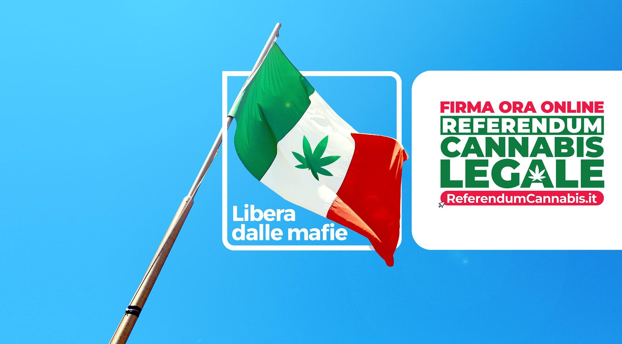 Изображение — ReferendumCannabis.