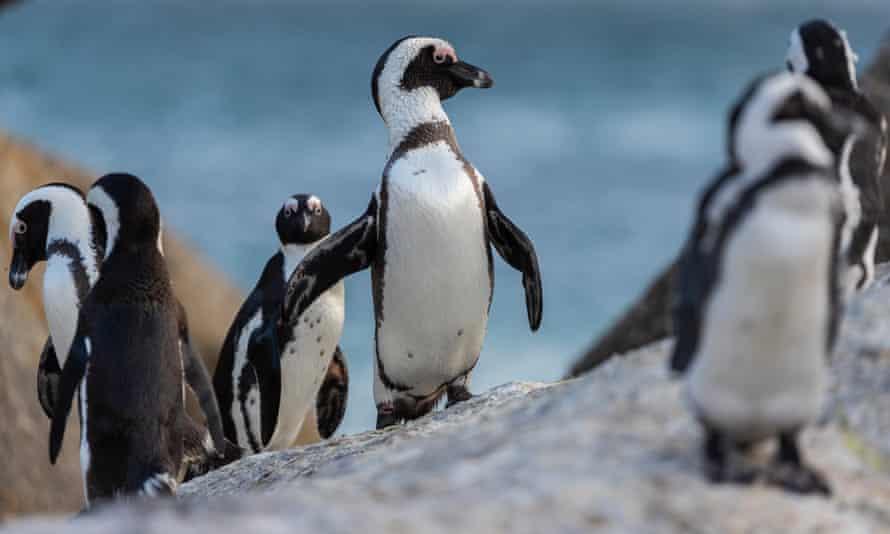 Фото — Nic Bothma / EPA.