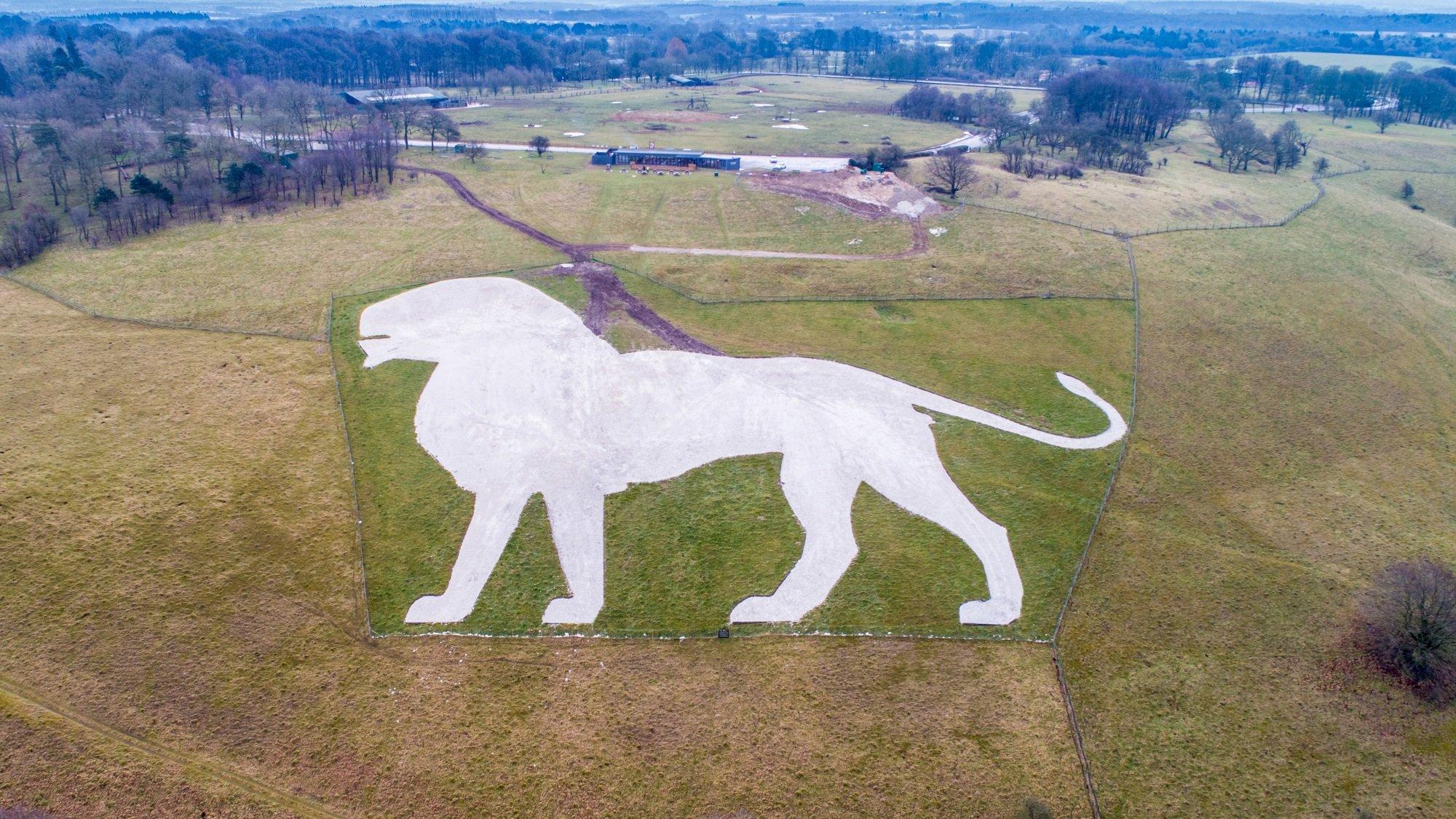 Меловой лев в Уипснейдском зоопарке. Фото — ZSL