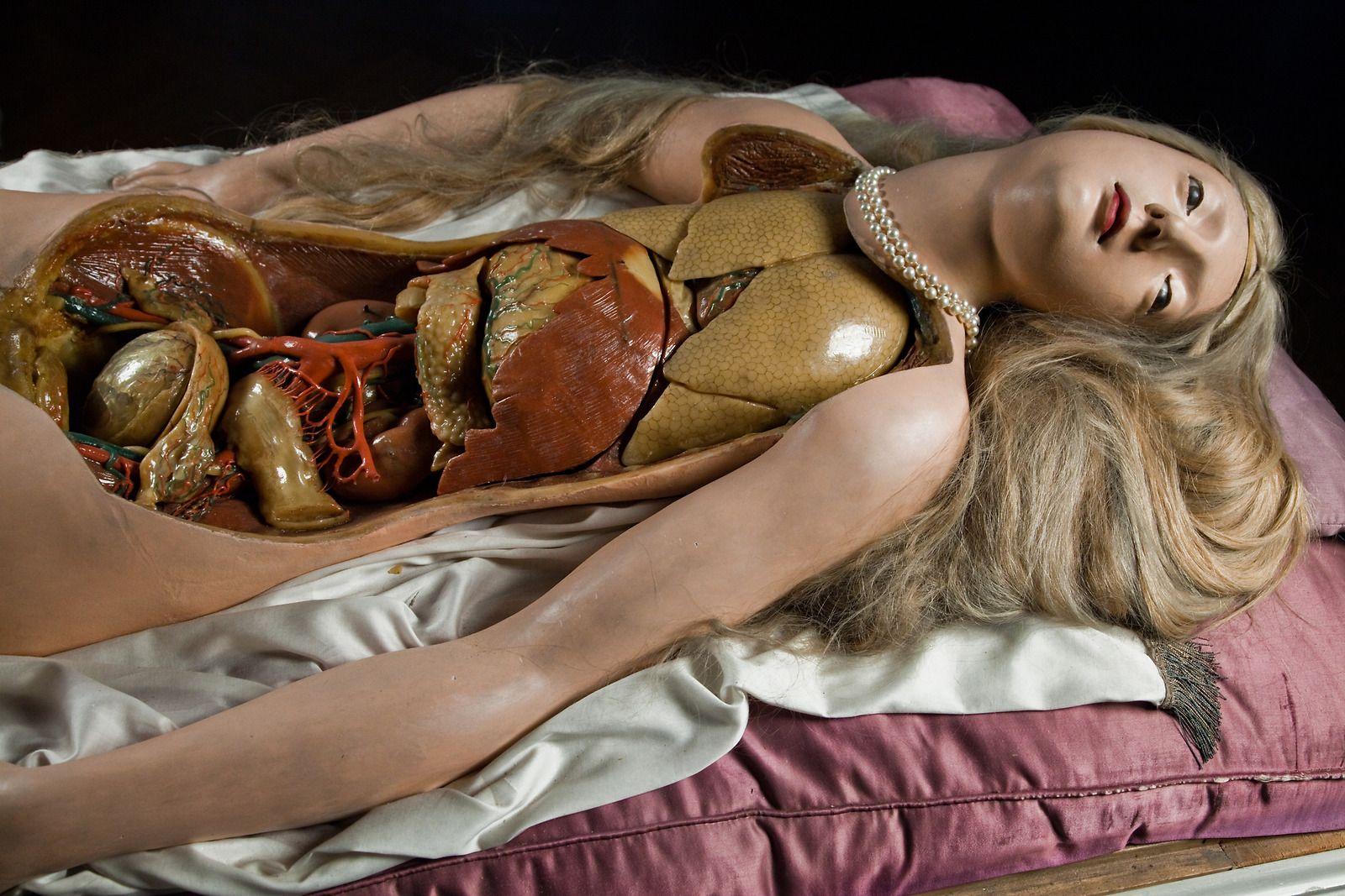 Анатомическая Венера. Почему в XVIII веке восковые трупы выглядели как произведение искусства
